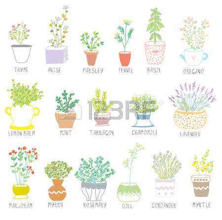 690 Sage Leaves Cliparts, Stock Vector And Royalty Free Sage.