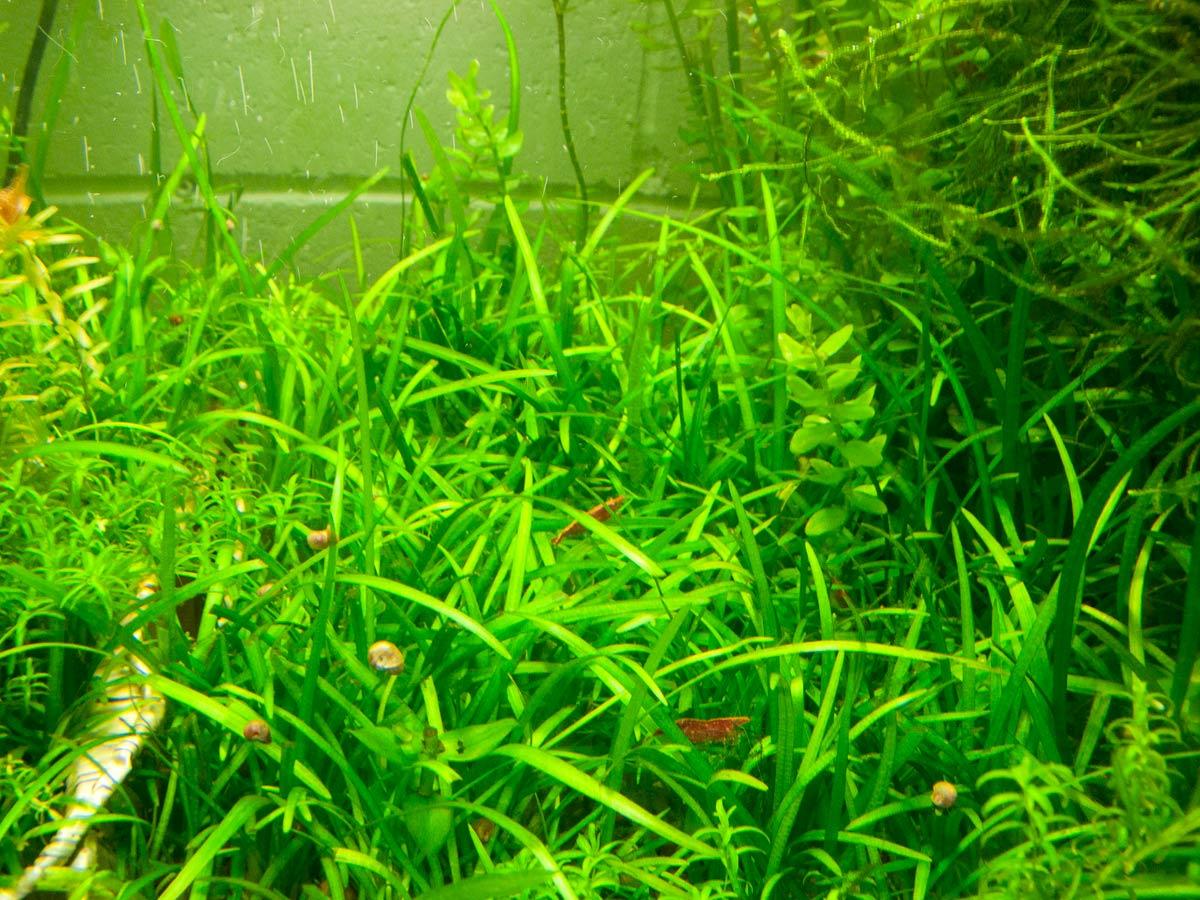 Aquarium Plant.