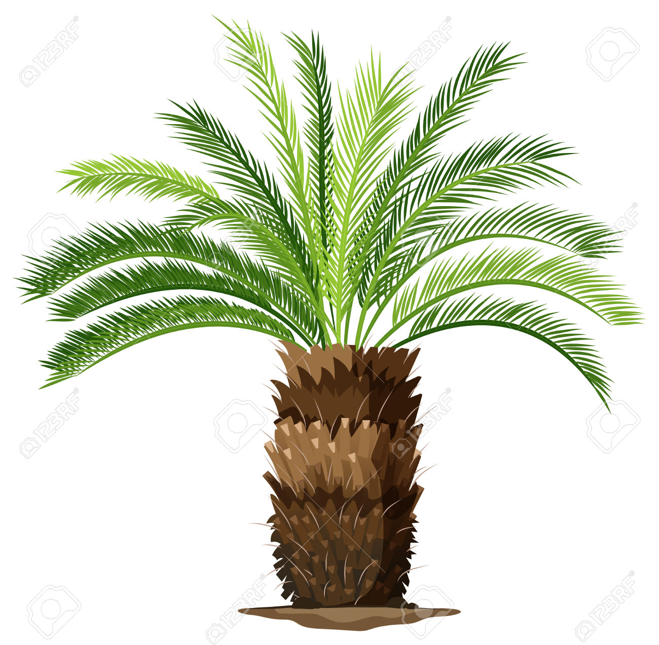 Illustration Of A A Topview Of A Sago Palm Plant On A White.