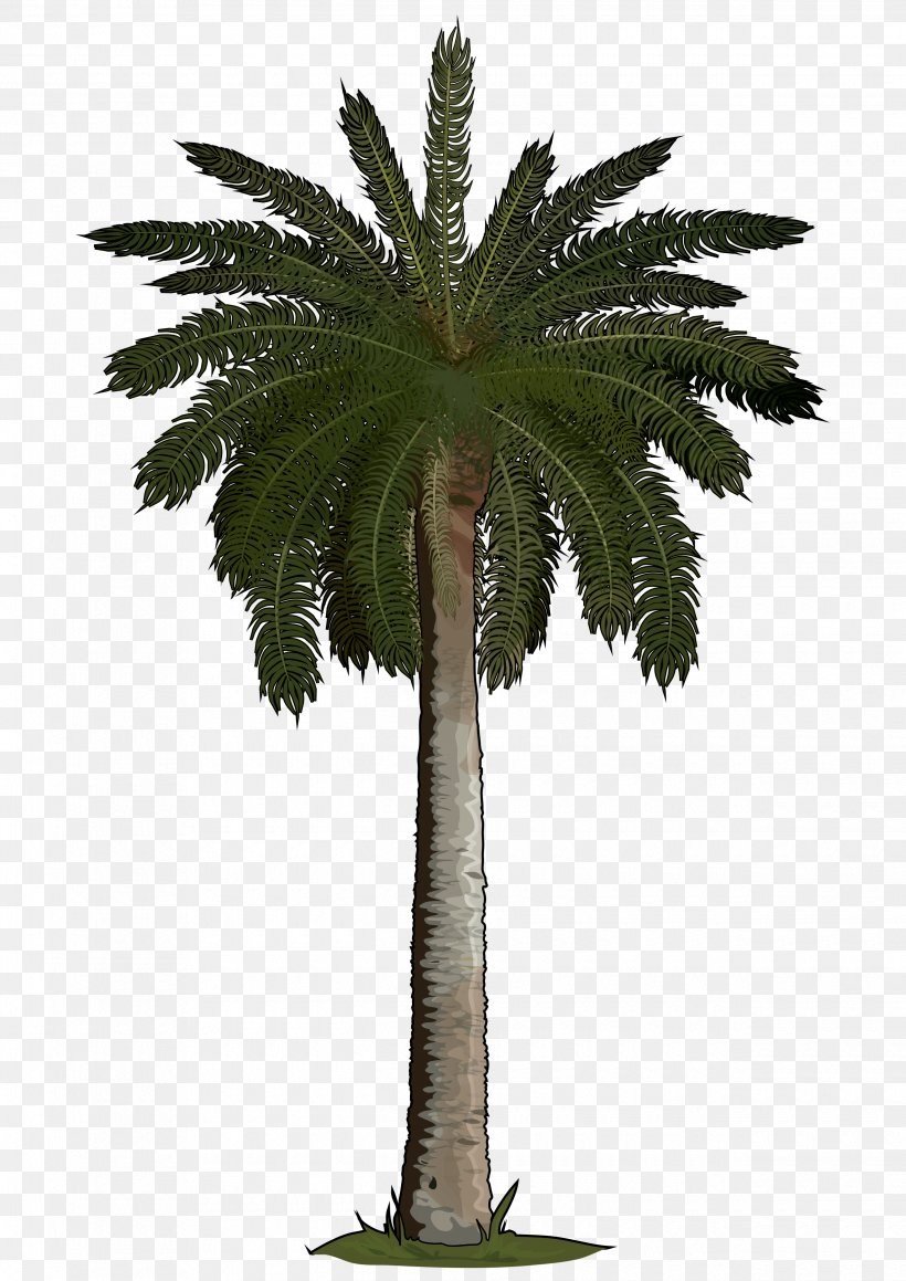 Arecaceae Sago Palm Tree Areca Palm Phoenix Roebelenii, PNG.