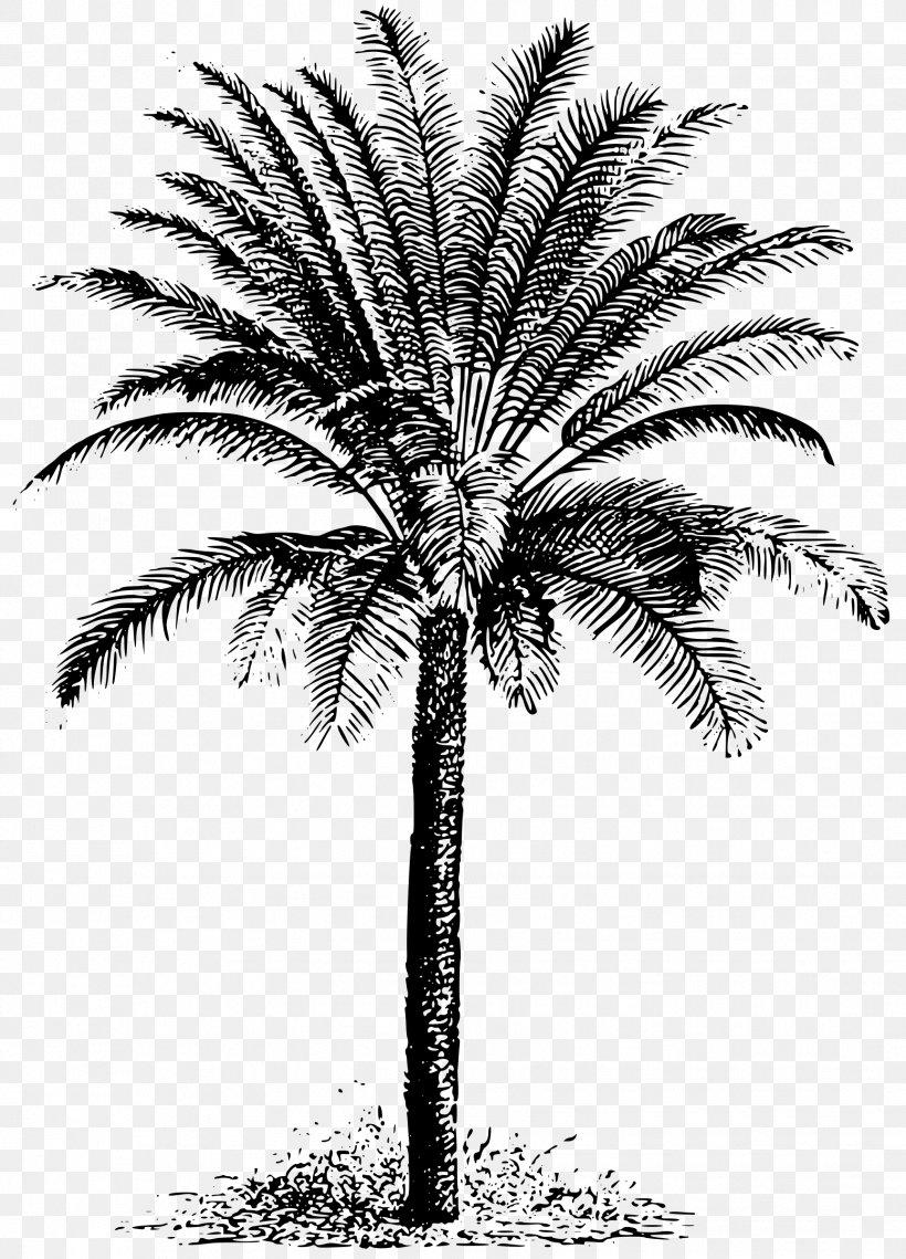 Sago Palm Cycad Arecaceae Clip Art, PNG, 1727x2400px, Sago.