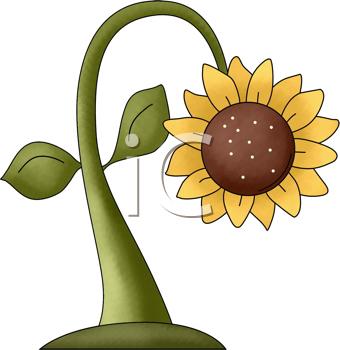 Royalty Free Sunflower Clip art, Flower Clipart.