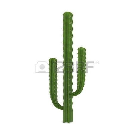 697 Saguaro Stock Illustrations, Cliparts And Royalty Free Saguaro.
