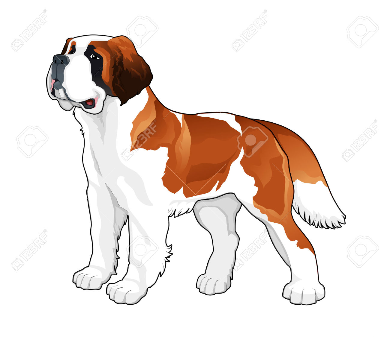 314 Saint Bernard Stock Vector Illustration And Royalty Free Saint.