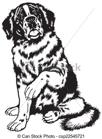 Vector Illustration of saint bernard black white.
