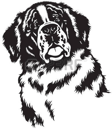 200 St Bernard Stock Vector Illustration And Royalty Free St.