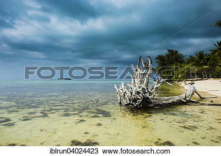 "Stock Photo of ""Dead tree on Micro beach, Garapan, Saipan."