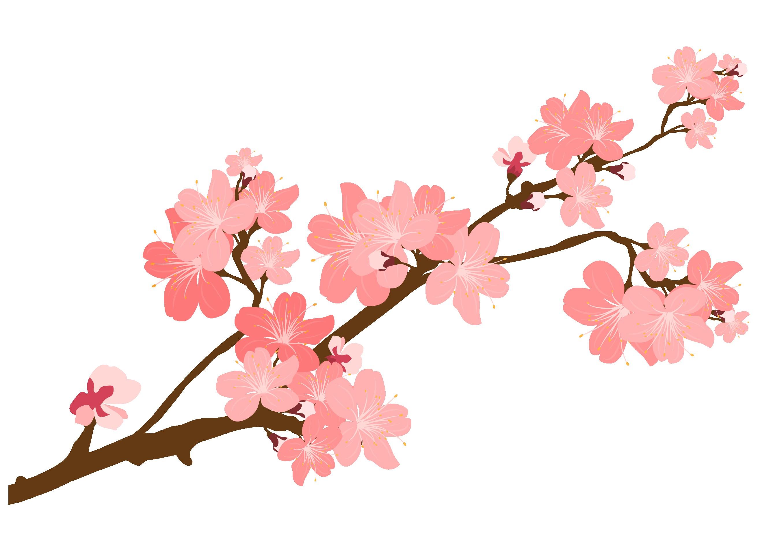 Sakura Branch Drawing.
