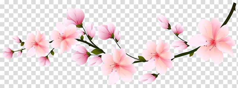 Pink flowers , Cherry blossom Flower , Sakura branch.