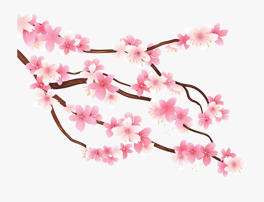 Cherry Blossom Branch Clipart.