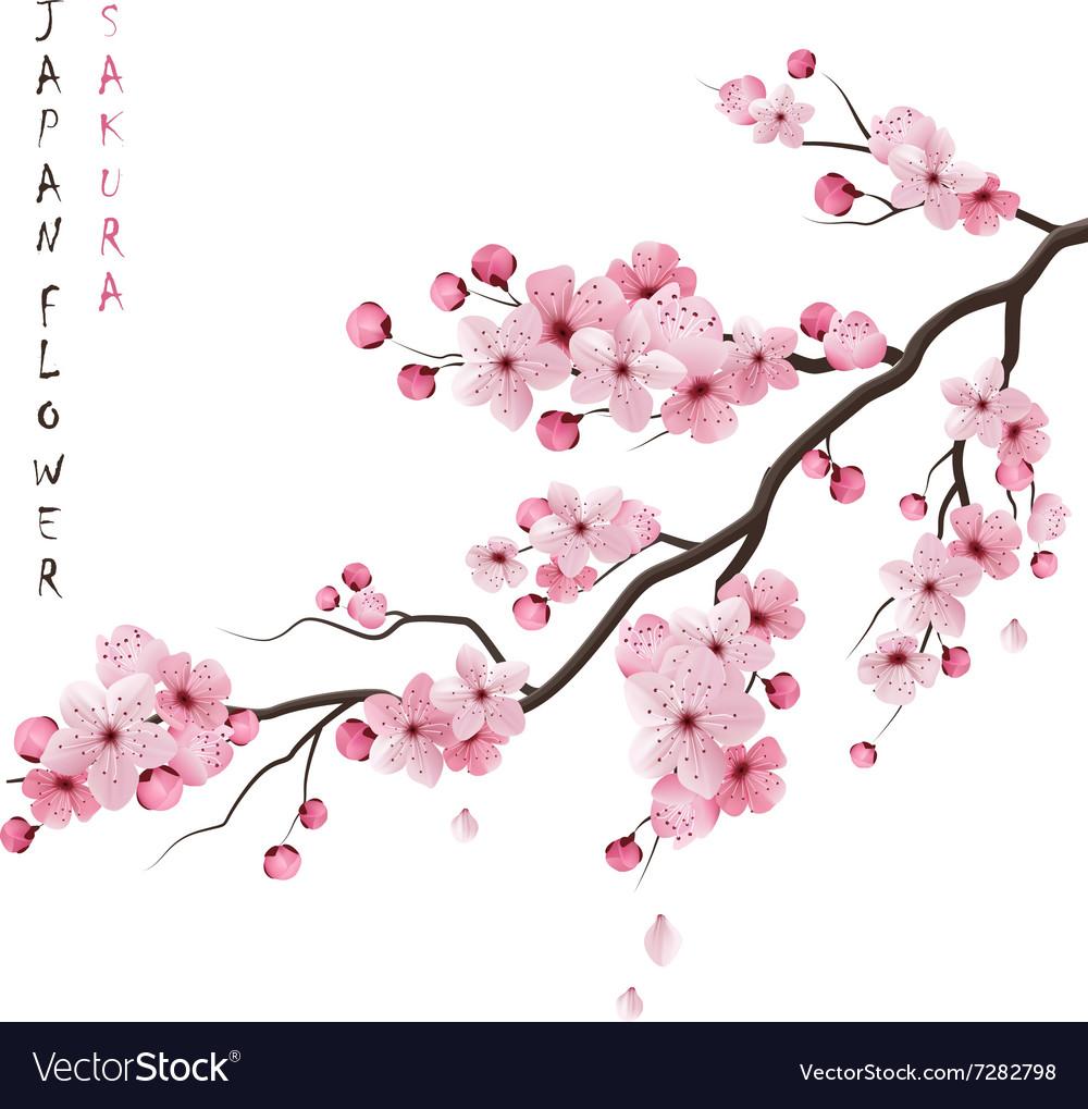 Realistic Sakura Branch.