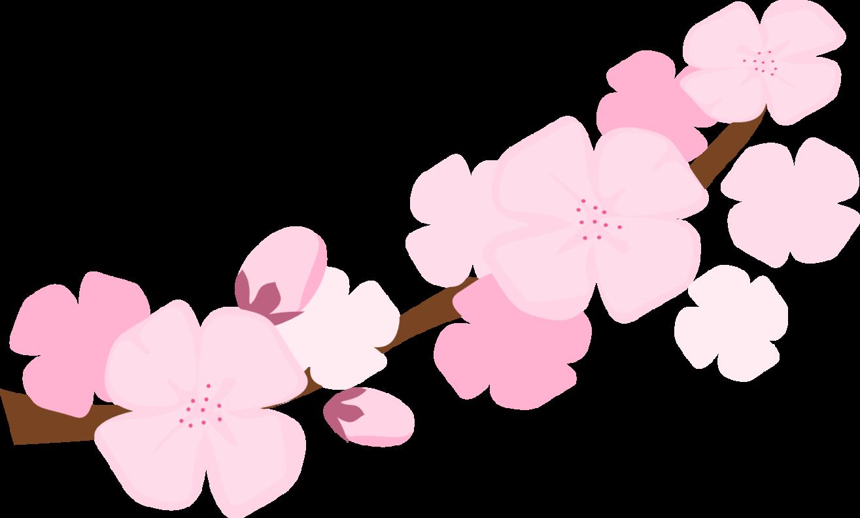 Sakura Blossom Clipart Sakura Flower.