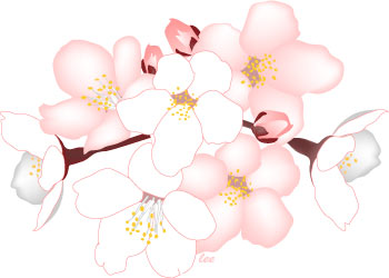 Free Blossom Flower Cliparts, Download Free Clip Art, Free.