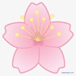 Sakura Flower PNG, Transparent Sakura Flower PNG Image Free.