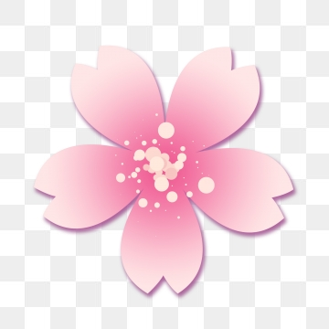 Sakura Flower Png, Vector, PSD, and Clipart With Transparent.