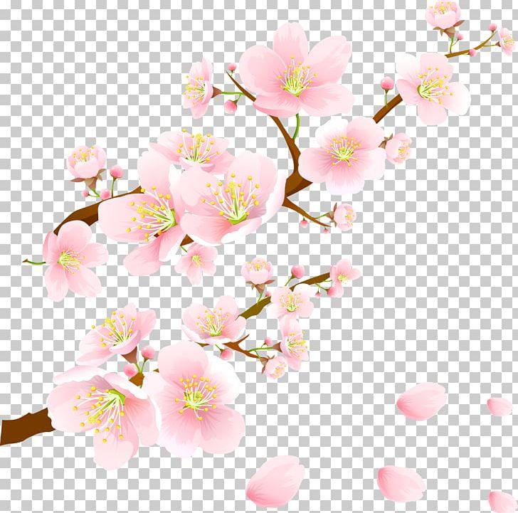 Sakura PNG, Clipart, Sakura Free PNG Download.