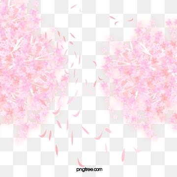 Sakura Png, Vector, PSD, and Clipart With Transparent.