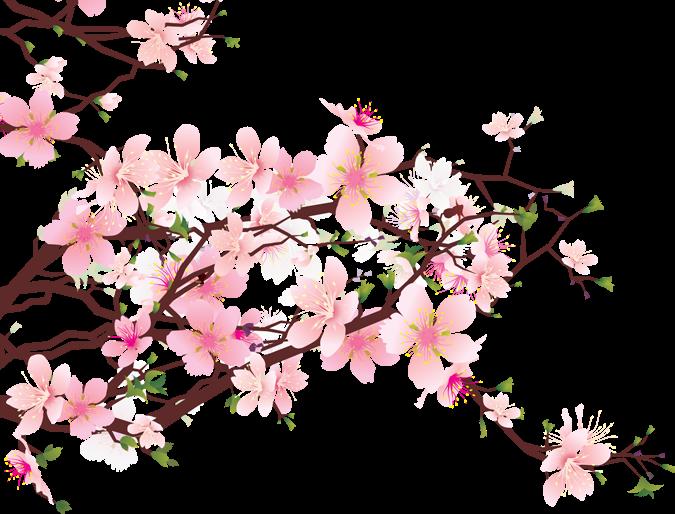 Sakura PNG Free Pic.