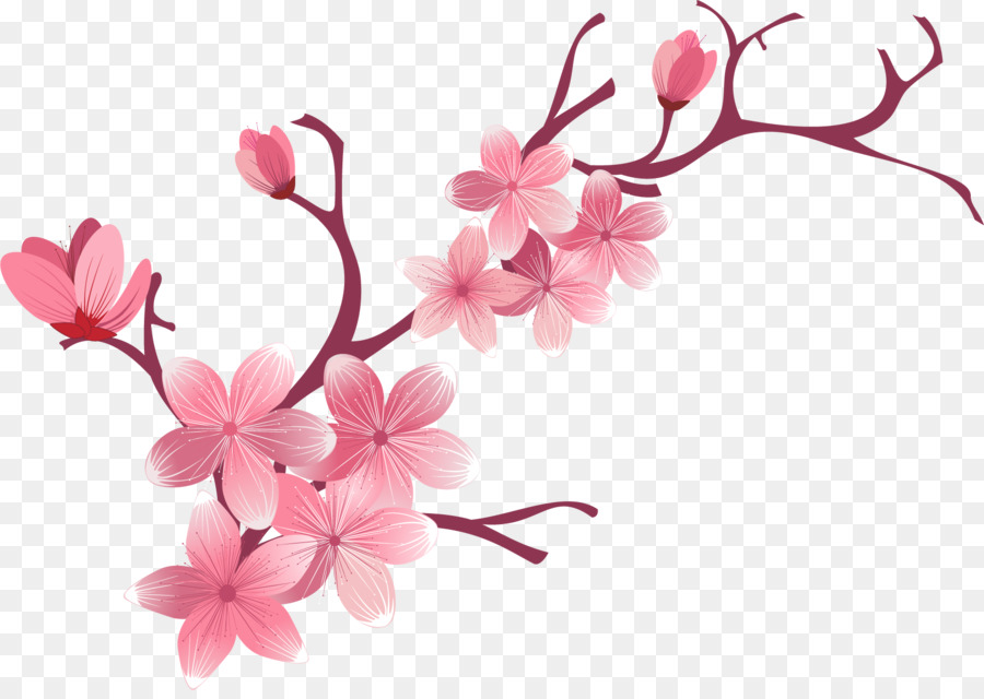 Download Free png Cherry blossom Flower sakura png download.