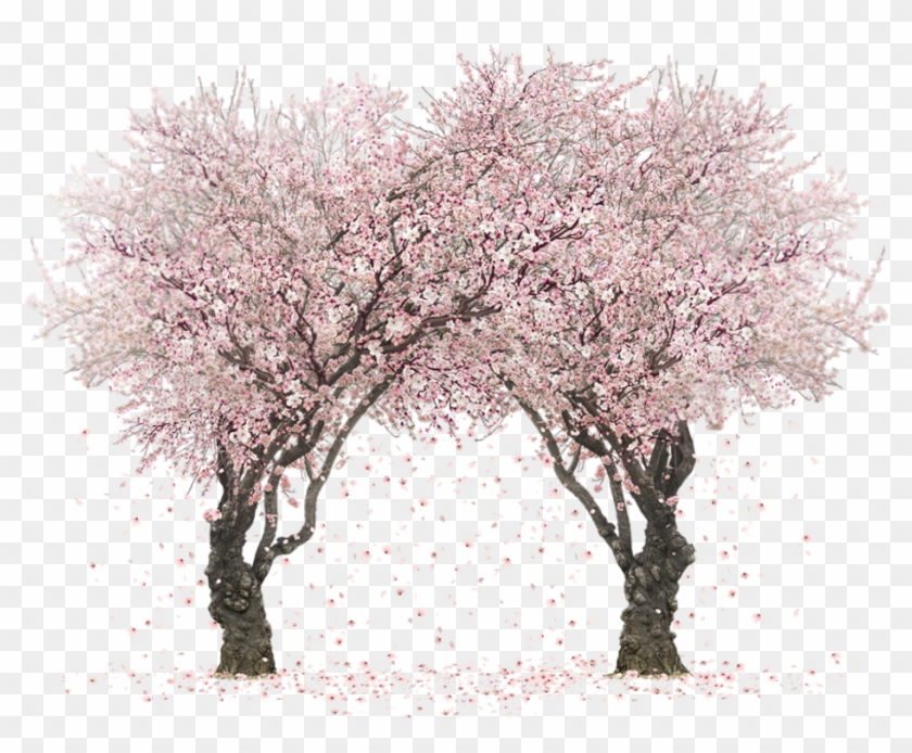 Real Sakura Tree Png, Transparent Png.