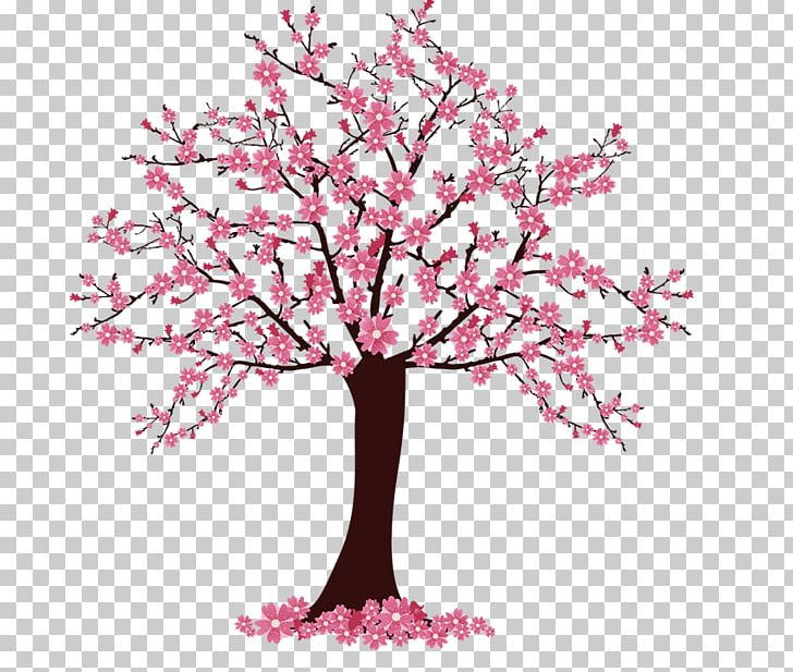 Cherry Blossom Tree PNG, Clipart, Blossom, Branch, Cherry.