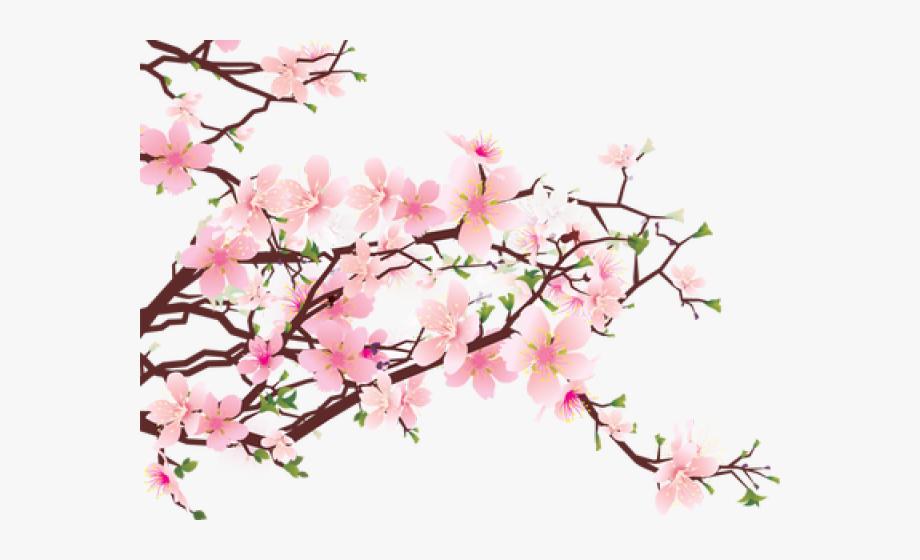 Sakura Clipart Blosson.