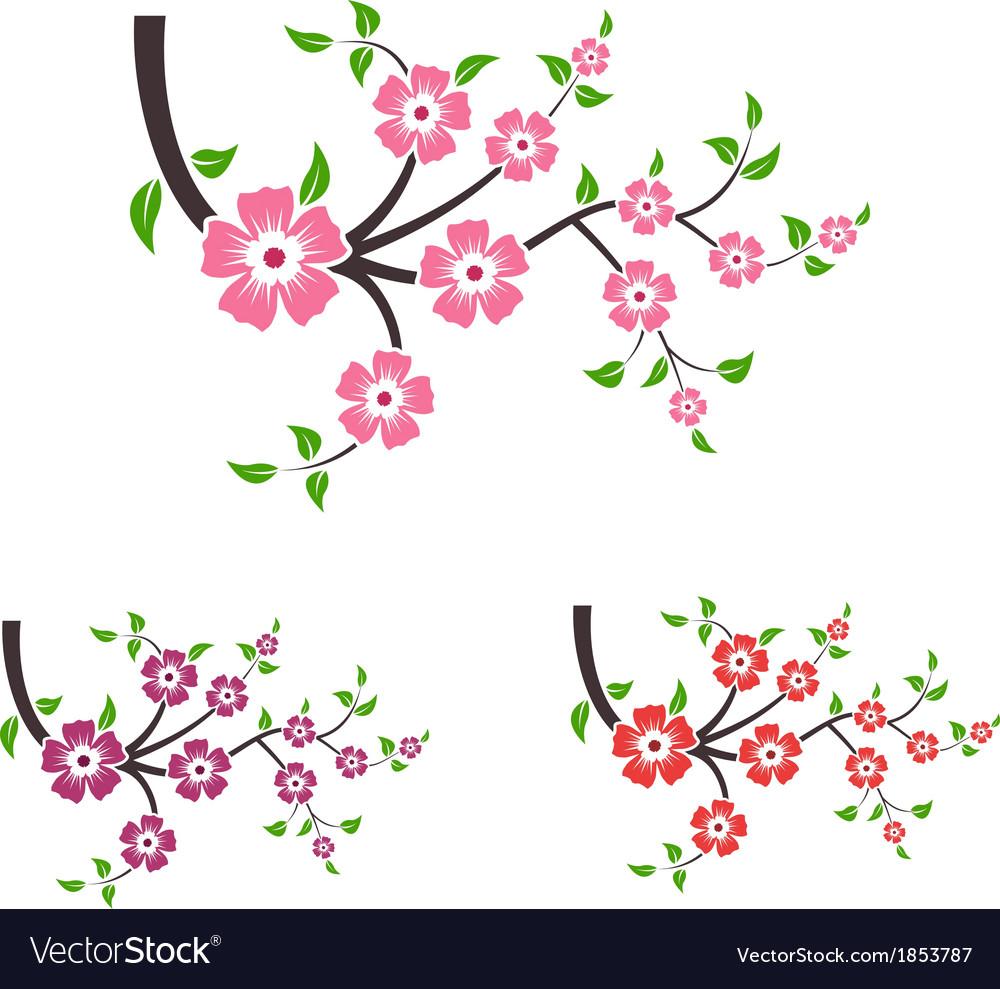 Branches of sakura.