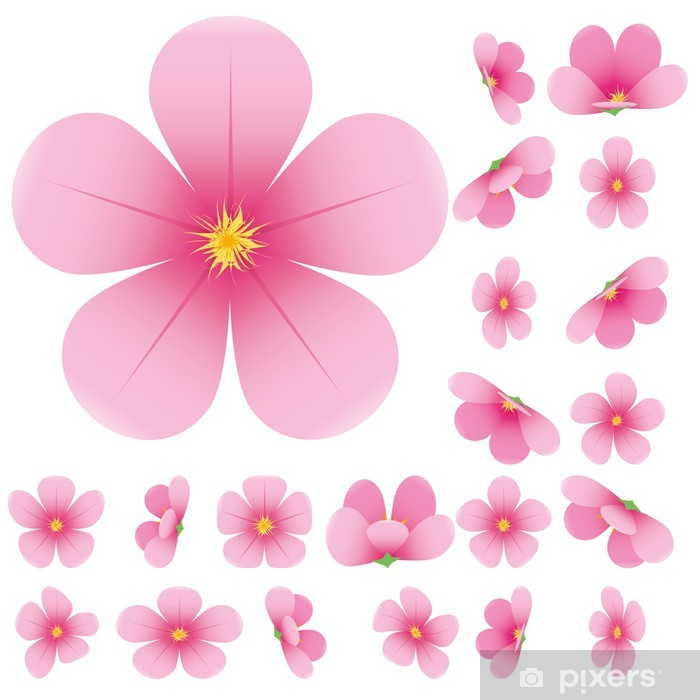 Cherry blossom, flowers of sakura, vector illustration Poster.