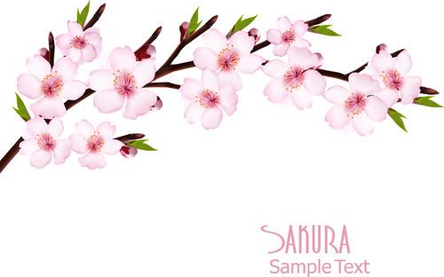 Sakura free vector download (57 Free vector) for commercial.