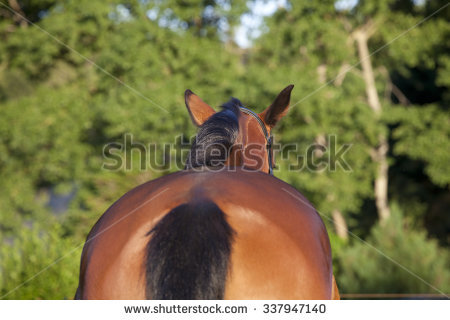 Horse Butt Stock Images, Royalty.