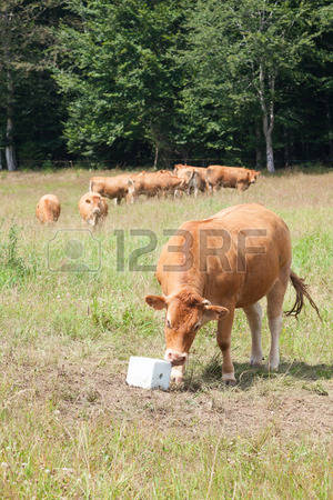 Ungulate Herbivores Images & Stock Pictures. 3,730 Royalty Free.