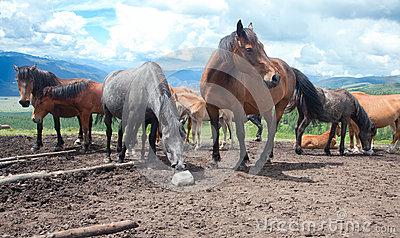 Horse Licking Salt Stock Photos.