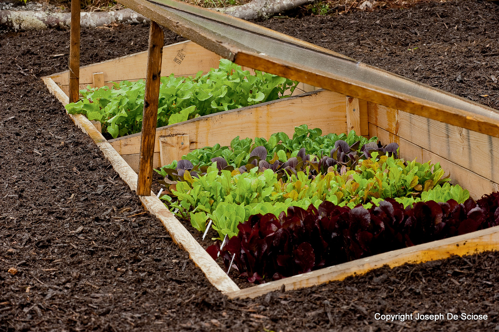 How to Grow Vegetables All Year Long (Even in Winter!).