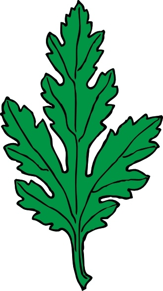 Ivy Leaf Green Chrysanthemum clip art Free vector in Open office.