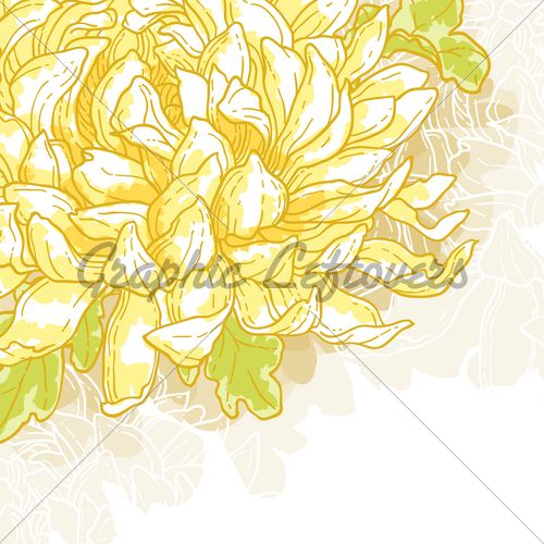 1000+ images about Chrysanthemum on Pinterest.