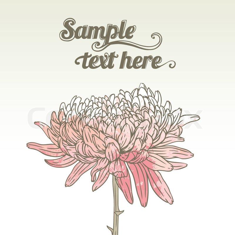 Buy Stock Photos of Chrysanthemum.