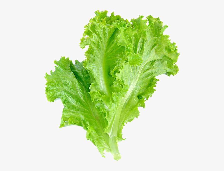 Romaine Lettuce Leaf Vegetable Salad Leaf Lettuce.