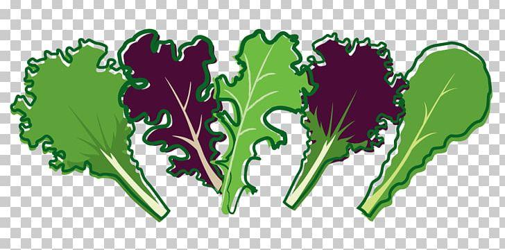 Leaf Vegetable Lettuce Salad PNG, Clipart, Arugula, Bolting.