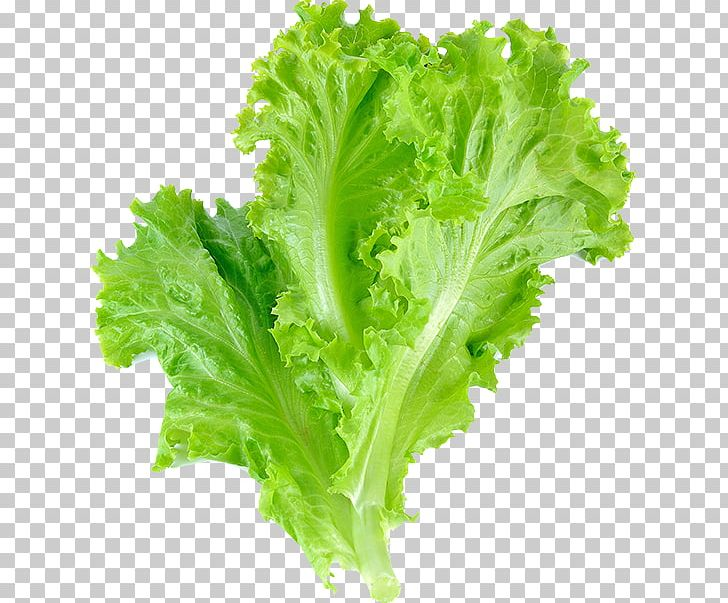 Romaine Lettuce Leaf Vegetable Salad Leaf Lettuce PNG.