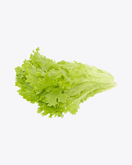 Download Frisée Salad Leaves Transparent PNG on Yellow Images 360°.