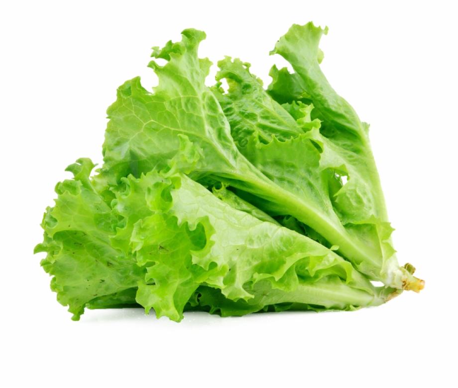Lettuce Sandwich Butterhead Lettuce Vegetable Salad.