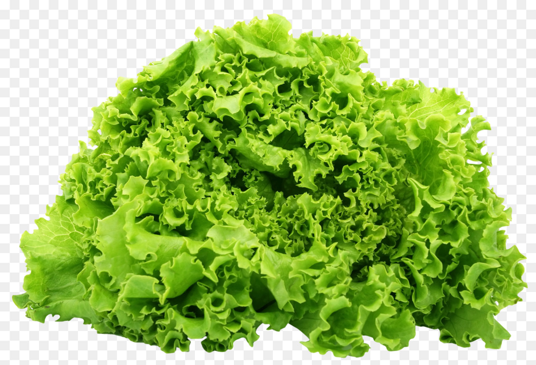 Png Lettuce & Free Lettuce.png Transparent Images #11296.
