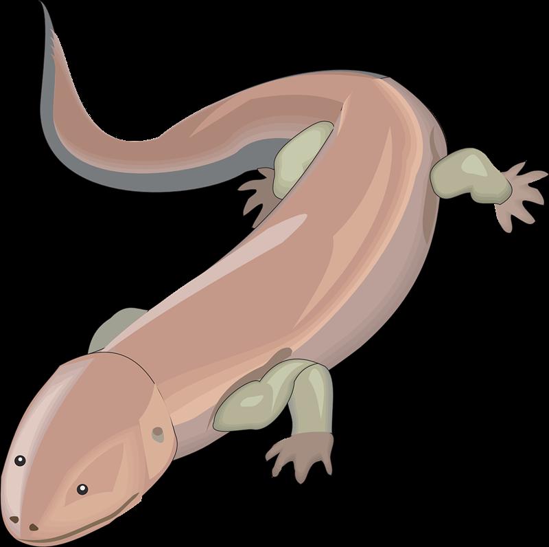 Free to Use & Public Domain Salamander Clip Art.