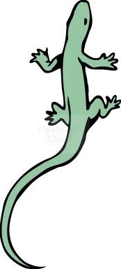 Salamander Clipart : salamander_197 : Classroom Clipart.