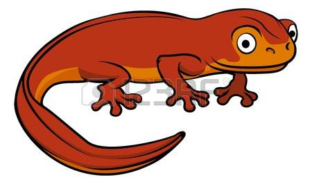1,951 Salamander Stock Vector Illustration And Royalty Free.