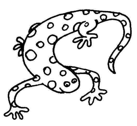 Free Salamander Clipart Black And White, Download Free Clip.