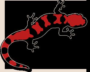 salamander clip art #63.