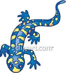 and Yellow Salamander.