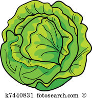 Salat Clip Art Illustrationen. 16.045 salat Clipart EPS Vektor.