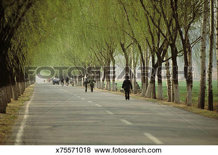 Pictures of China, Beijing, people on road bordered by willows.